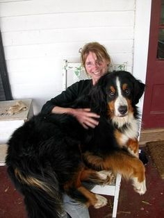 I love my Berner! (Bernese Mountain Dog) #BerneseMountainDog