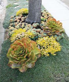 Better Than Grass: 10 Ways to Landscape a Parkway (That Space Between the Sidewalk and the Street) | eHow Extras | eHow