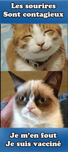 Grumpy cat quotes are funny to read. Tardar Sauce also known as the Grumpy cat is a celebrity and queen of cats. We have collected a list of amazingly funny and Grumpy Cat Quotes, Funny Grumpy Cat Memes, Funny Cats, Funny Memes, Grumpy Kitty, Funny Sayings, Funny Minion, Kitty Kitty, Grumpy Car