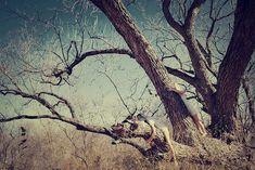 Vipassana 8.5 x 11 by KoettPhotographs on Etsy