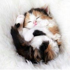 I love cats so much, I am sometimes worried about my sanity. x