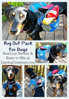 Read our Review of Why We Wag's Emergency Bug Out Pack for dogs + Enter For Your Chance to Win one! ©LapdogCreations #sponsored Dog Mom | Rescue Dog | Hiking with Dogs | GIVEAWAY | Dog Products