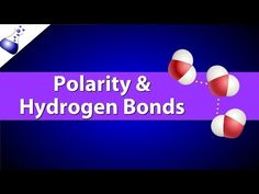 Polarity and Hydrogen Bonds - YouTube