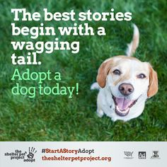 And somehow, they all have a happy ending!  #StartAStoryAdopt #NationalAdoptADogMonth
