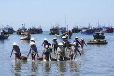 Vietnamites descarregant les barques de pesca de #MuiNe, #Vietnam.