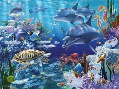 3) Le paradis des dauphins chez leylana2