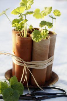 Tankar från Trädgårdsmästarn: Lerkrukor för bebisarna