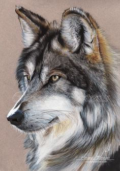Grey wolf by Sadness40 on DeviantArt                                                                                                                                                      Más