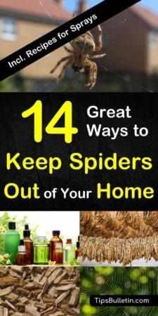How To Keep Spiders Out Of Your Home Naturally Get Rid Of