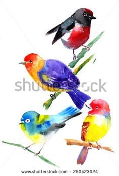 Bird. Hand drawn watercolor painting on white background. - stock photo