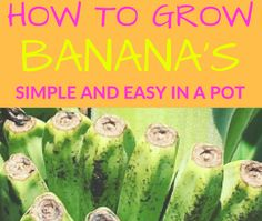 How To Grow Banana In A Pot