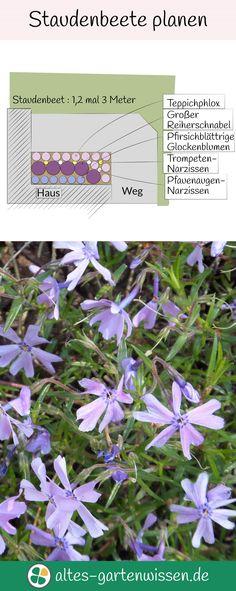 altes-gartenwissende (altesgartenwissende) on Pinterest - gartenpflanzen winterhart immergrun