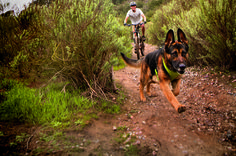 Explore Nature. Top tips for hiking with your dog.