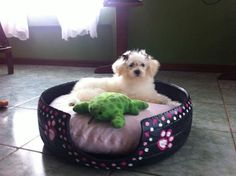 here is my COCO, with her new bed we made for her..<3 visit our page at... https://www.facebook.com/reciclamosyembellecemos