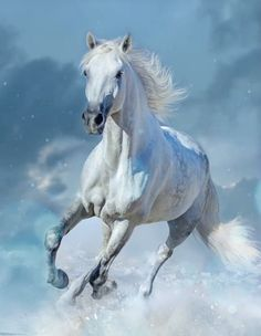 Shadowfax, of the race of long lived Mearas. Beautiful Arabian Horses, Most Beautiful Horses, Majestic Horse, Animals Beautiful, Cute Horses, Pretty Horses, Horse Love, Horse Photos, Horse Pictures