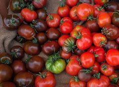 Tomatoes should be kept in the fridge. True or False?