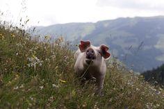 Blogtirol - Tirolerisch für Anfänger – Lieblingswörter