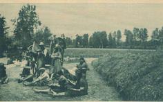 1951, #mondine in #risaia. #Lomellina #riso