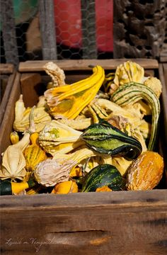 Harvest Vegetables by Laurie from Dalla Mia Cucina Harvest, Challenges, Pumpkin, Inspire, Facebook, Vegetables, Food, Buttercup Squash, Meal
