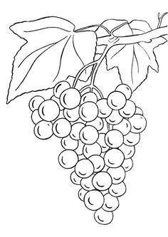 25 Lovely Grapes Coloring Pages For Your Little Ones