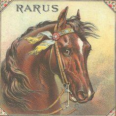 """""""Rarus"""" vintage label artwork.  Very nice!"""