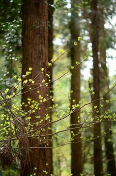 Photography nature green sunlight 31 Ideas for 2019 Tree Forest, Forest Light, Walk In The Woods, Spring Time, The Great Outdoors, Mother Nature, Woodland, Nature Photography, Scenery