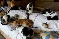 The Cat House On The Kings. cathouseonthekings.com