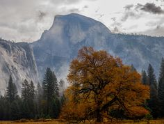 A weirwood in front of Half Dome Yosemite National Park [OC] [4828x3648]
