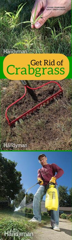 How to Get Rid of Crabgrass: Follow these tips to defend your turf from crabgrass and be one step closer to having a perfect lawn http://www.familyhandyman.com/landscaping/how-to-get-rid-of-crabgrass/view-all