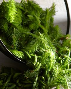 Spruce Tip Syrup.  5 cups spruce tips  6 cups water  5 cups sugar    Method  Coarsely chop spruce tips  Combine water, spruce tips and sugar in a large pot.  Bring to a boil stirring constantly for five minutes.  Reduce heat and simmer for an hour or so on low or until the syrup thickens to your liking.  The color will be a light a rose.     Hungry Ghost. I love you.