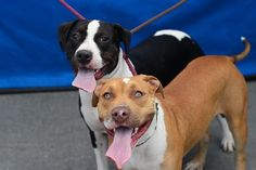 URGENT! BALDWIN, CA: READ THEIR STORY & SHARE! 2 Fun-loving siblings surrendered by owner, desperate for a new home.