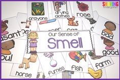 sense of smell sorting pieces