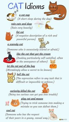 There are lots of English expressions based on animals – most especially the cat. Let's learn Idioms about CATS in English. English Vocabulary Words, Learn English Words, English Phrases, English Fun, English Idioms, English Study, English Lessons, English Grammar, French Lessons