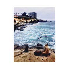 Eu não podia ir embora sem voltar no lugar que mais me emocionou nessa cidade. Inexplicável a sensação que senti quando cheguei aqui! 💙💙💙 #lajolla #lajollacove #findingmyself #emotions #inexplicable #seals #inlove #dreams #traveling #alone #sandiego #cali #california #mylastday #driveyourlife #driveyourworld #youcandoit #changeyourmind #lajollalocals #sandiegoconnection #sdlocals - posted by Raquel  https://www.instagram.com/quelmenezfe. See more post on La Jolla at…