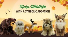 Defenders of Wildlife: Adopt a wild animal and help protect wildlife. - Wildlife Adoption and Gift Center