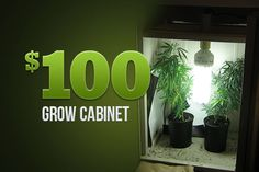Marijuana Growers HQ – The $100 Grow Cabinet http://www.marijuanagrowershq.com/the-100-grow-cabinet/