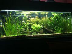 tonalidad ya en su totalidad, podas y nuevas plantas, se agrego filtro externo de 1400 L/h con UV y co2 pro