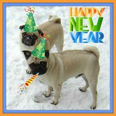 New Year Pugs