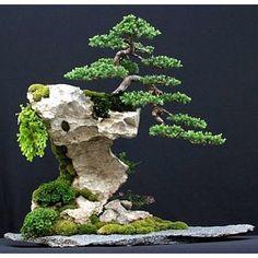 Delicatly Powerful Bonsai Art in a Rock...