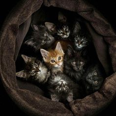 gang of cats . one of our cats was found in a box of kittens on the side of a busy road, and he's a ginger Pretty Cats, Beautiful Cats, Animals Beautiful, Beautiful Images, Baby Animals, Funny Animals, Cute Animals, Funny Cats, Cute Cats And Kittens
