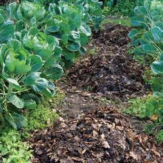 Using leaves in the garden will boost the soil's organic matter.