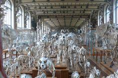 Galeries de Paléontologie et d'Anatomie comparée