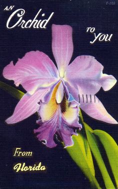 An orchid for you from Florida! | Florida Memory