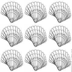 Seashells 3 Scallops- Pen Illustration