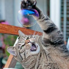 yyyeeeaaah !!! je l'aurai, ma sélection dans l'équipe de patt'ball(*) ! (*ben oui : les humains jouent au handball, les chats, eux, jouent au patt'ball, logique !)