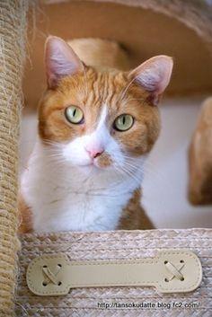 里親さんブログロレンの誕生日 - http://iyaiya.jp/cat/archives/72532