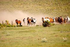 Running horses at Zapata Ranch during annual artist gathering. #ZapataRanch