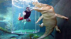 Nageons ensemble avec le plus grand crocodile du monde !