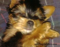 Caring for your senior dog   Animals   Pinterest   Dog