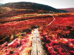 Ireland Landscape Photography.  Red by CandyMountainPhotos on Etsy, €15.00